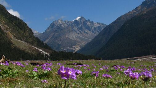Valley Of Flowers Tour Package